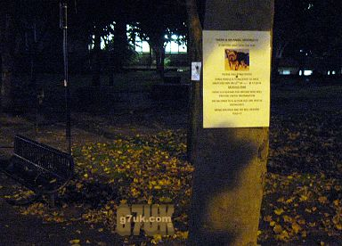 Poster in Sackville Park about a pet dog that was 'snatched'