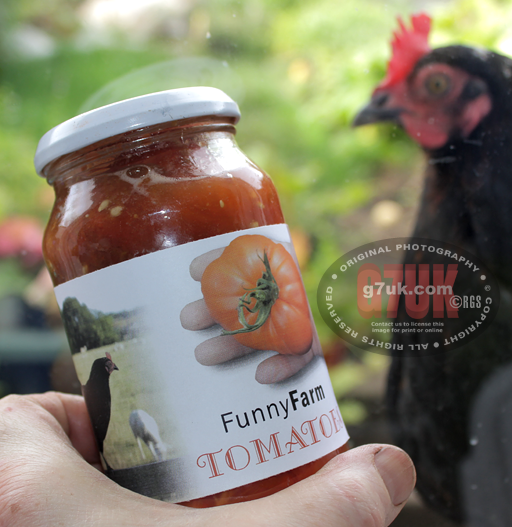 Hen checks out herself on the label on a jar of tomatoes